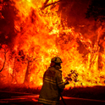 Звук лесного пожара скачать