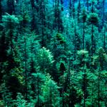 Звук ветра в лесу
