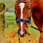 Лошадь жует сено и смотрит на нас
