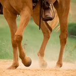 Звук копыт лошади — лошадь бежит по грунтовой дороге