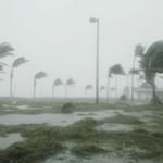 Ветер гнет деревья, льет дождь — звук ветра с дождем