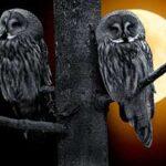 Крики ночных птиц